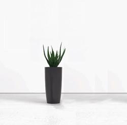 Kantoorplant hoog met plantenbak rond 70cm