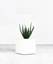Kantoorplant met plantenbak vierkant